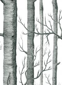 Papier peint Woods noir sur blanc