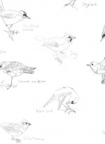 Papier-peint oiseaux Grey Wagtail par Edwyn Collins