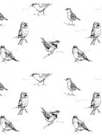 Papier-peint oiseaux Nuthatch & Blackcap par Edwyn Collins