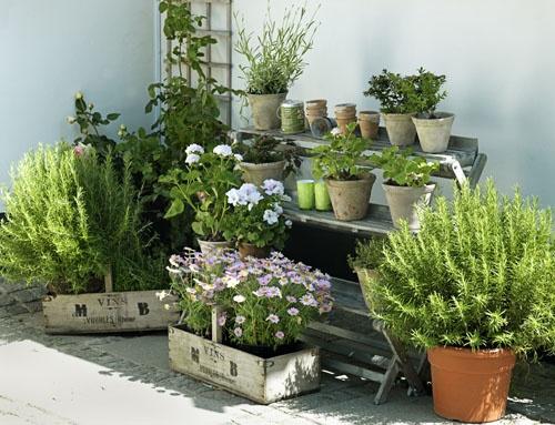 des plantes aromatiques