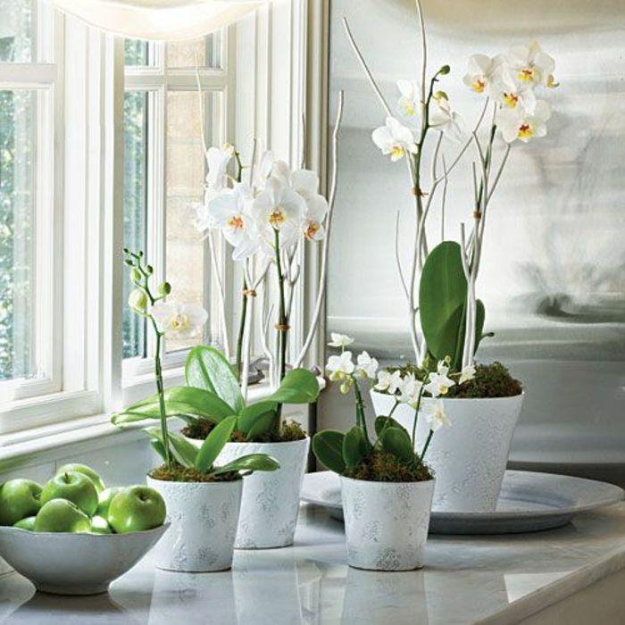 des jolies orchid es the collection. Black Bedroom Furniture Sets. Home Design Ideas