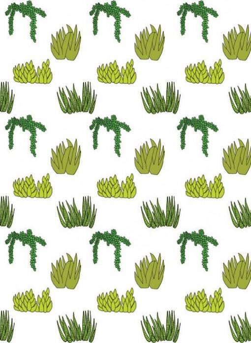 Papier peint Plantes Succulentes Baines & Fricker